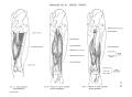 Richer - Anatomie artistique, 2 p. 71.png