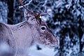 Riisitunturi National Park, Finland (Unsplash).jpg