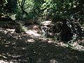 Riserva naturale orientata Bosco di Santo Pietro 10.jpg
