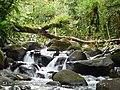 Rivière (parc national de la Guadeloupe).jpg