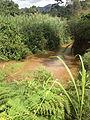 Rivière Bamena 1.jpg