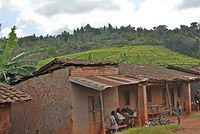 200px-Road_between_Bujumbura_and_Gitega_-_Flickr_-_Dave_Proffer_%284%29
