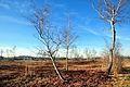 Robenhauser Riet 2012-01-18 14-48-28.JPG
