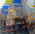 Rodents in cages outside wet market in Shenzhen, China.jpg
