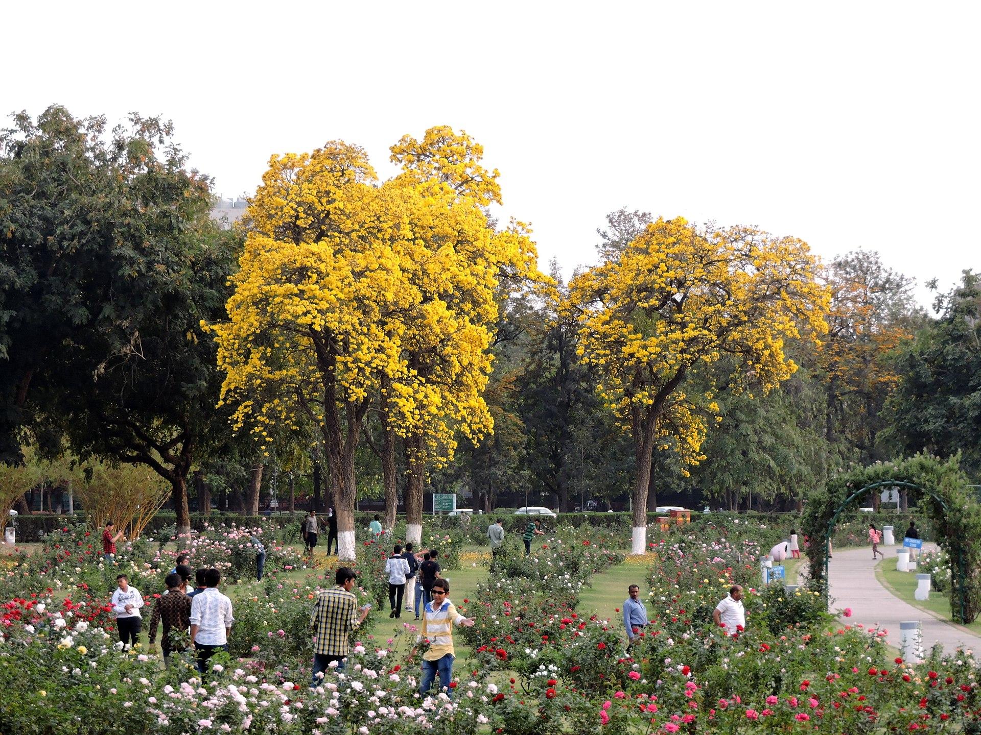 Roses In Garden: Zakir Hussain Rose Garden