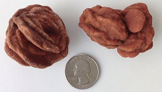 Oklahoma - State rock (rose rock) specimens from Cleveland County, with a US quarter for size reference