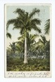Royal Palms, Cocoanut Grove, Miami, Fla (NYPL b12647398-62374).tiff