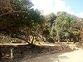 Ruines Romaines Tipaza 4.jpg