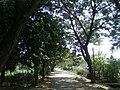 Rural road at Pogallapalli 3.jpg
