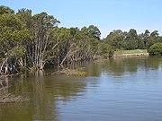Rydalmere Parramatta River