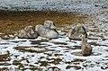 S.O.S. Natur 02 by Antonina Wysocka-Jończak.jpg