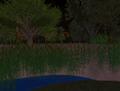 SL - marais virtuel.png
