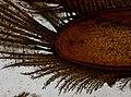 Saduria entomon (YPM IZ 091068).jpeg