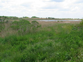 Marine Park - A typical salt marsh, one of many in Marine Park