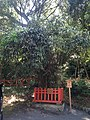 Samashidake Bamboo in Lower Shrine of Usa Shrine.jpg