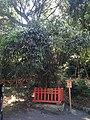 Samashidake Bamboo in Lower Shrine of Usa Shrine.jpg