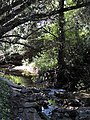 San Geronimo Creek, California.jpg