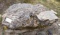 Sandstone, Karmacs, Somló formation.jpg
