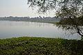 Santragachi Lake - Howrah 2013-01-25 3593.JPG