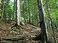 Schody - panoramio (1).jpg