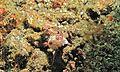Sea Slug (Chromodoris hintuanensis) (6059032769).jpg