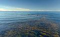 Seaweed (6045911923) (2).jpg