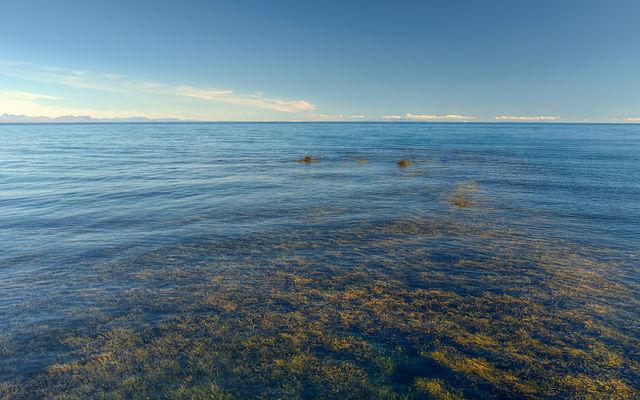 Появление токсичных водорослей на побережье Польши привело к закрытию пляжей