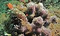 See Slug (Hypselodoris infucata) (8457612569).jpg