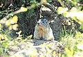 Sentier des marmottes.jpg