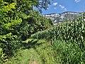 Sentier pédestre, Méry (Savoie) 2016.JPG