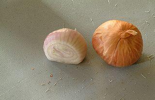 Shallot Variety of small onion