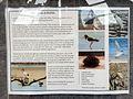 Shelter Flora Fauna Birdlife Info Board - panoramio.jpg