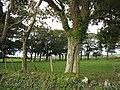 Shelter belt of trees on the west-facing side of Clegir Mawr farm - geograph.org.uk - 1021205.jpg