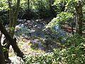 Shishigahana Wetland.jpg