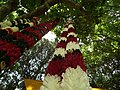 Shop selling from Lalbagh flower show Aug 2013 8668.JPG