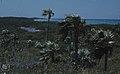 Silvertop palms and Red Salt Pond. Little San Salvador. (37983291965).jpg