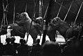 Sirkuselefanter (1962) (9929449843).jpg