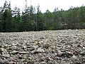 Skuleskogen National Park - field of stone rubble.jpg