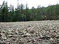 Skuleskogen National Park - field of stone rubble.jpg
