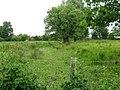 Small stream through pasture near Ickham - geograph.org.uk - 1345754.jpg