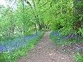 Smeaton Lake, Bluebell Walk - geograph.org.uk - 920596.jpg