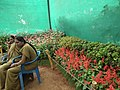 Snap from Lalbagh Flower Show Aug 2013 8367.JPG