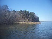 A wooded lakeshore with shallow grassy areas