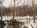 Snowy woodland near Kells - geograph.org.uk - 1636926.jpg