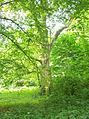 Sobota, park, 2012 MZW 100 5045.jpg