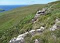 Southern slopes of Ben Vratabreck - geograph.org.uk - 912846.jpg