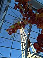 Space Needle from Chihuly Garden and Glass museum.jpg