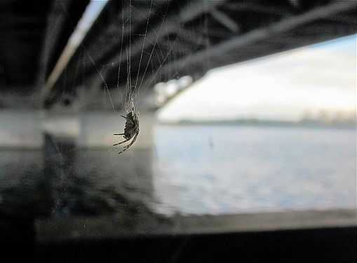 Spider+bridge.jpg