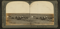 Spreading manure and plowing with tractor, Nebraska, from Robert N. Dennis collection of stereoscopic views.png