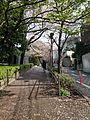 Spring of Kita-Shinagawa - panoramio.jpg